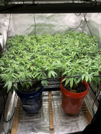 1st time grow Take 2
